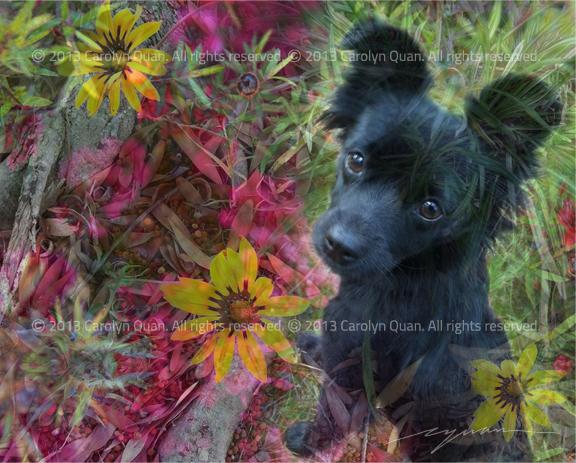 pet portraits by carolyn quan