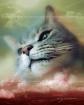 cat pet portraits pet artwork